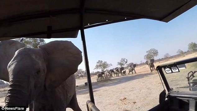 The video concluded with the elephant retreating while making a trumpet sound with its trunk and heading back to its herd