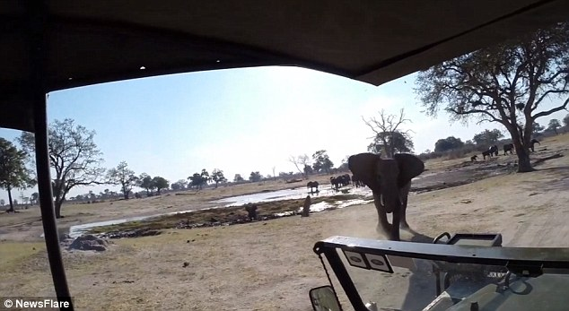 The African bull Elephant lowered its head while running towards the safari truck at high speed